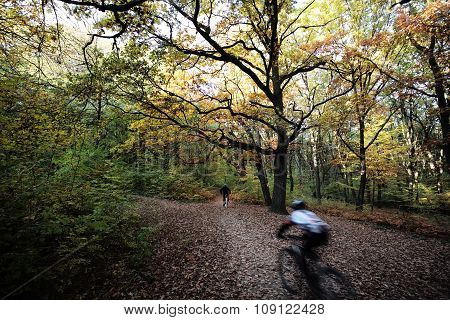 Bicycle Riders In Autumn Park