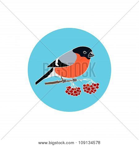 Icon Colorful  Bullfinch