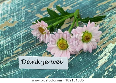 Dank je wel (thank you in Dutch) with pink daisies on rustic wooden surface