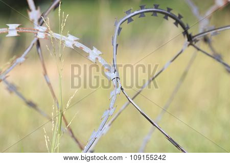 Barbed Wire , Border.