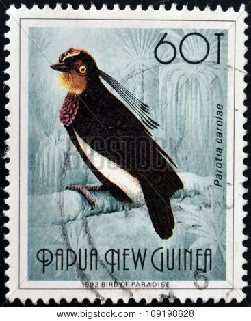 PAPUA NEW GUINEA - CIRCA 1992: A stamp printed in Papua shows bird of paradise parotia carolae