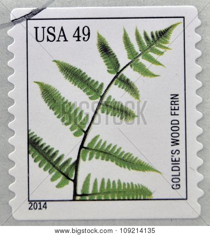 A stamp printed in USA dedicated to Ferns shows goldies wood fern circa 2014