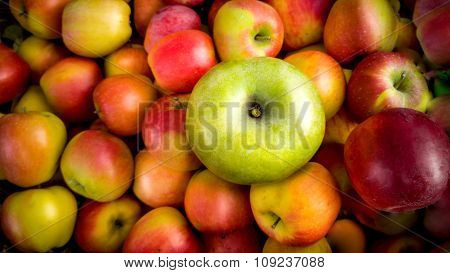 Closeup Of One Green Apple Lying On Pile Of Red Apples