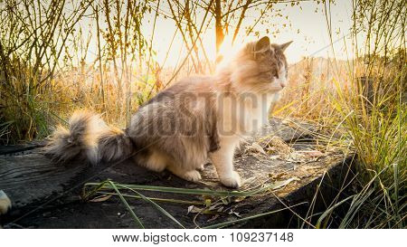 Toned Shot Of Cat Sitting On Log At Lake At Sunrise