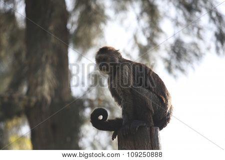 monkeys climb trees