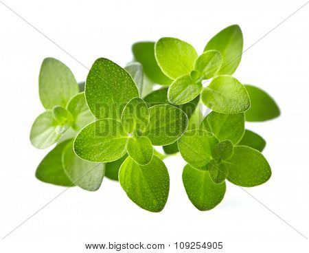 Thyme leaves on a white background