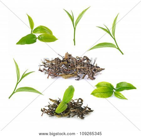 Black Tea With Green Leaf Isolated On White