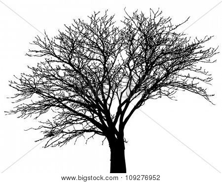 Silhouette vector tree
