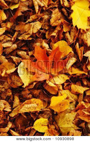 golden fall