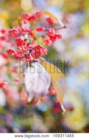 Natural Autumnal Blurred Background With Flowers