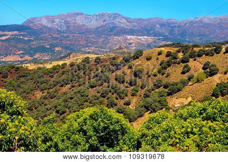Andalusian Landscape.