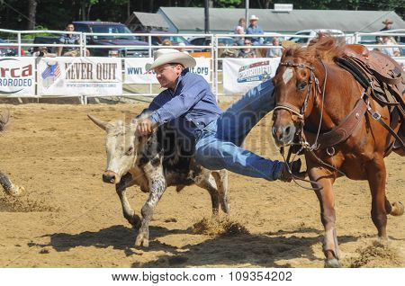 A Rodeo Cowboy Diving From His Horse To Catch A Steer