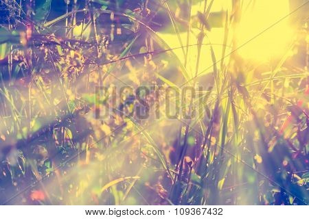 Abstract Gress Flowers Background In The Field With Sun Light Effect,made With Filter Soft Focus And