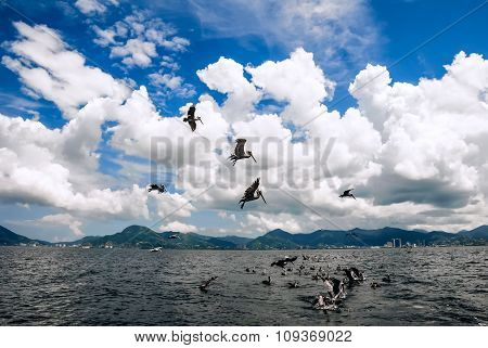 Group of pelicans behind a trawler boat catching fish and flying above Trinidad and Tobago