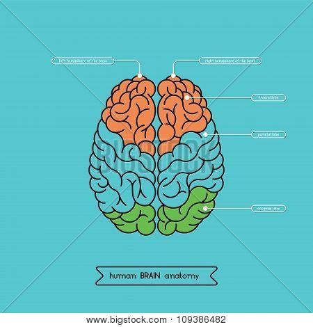 Brain Top 1