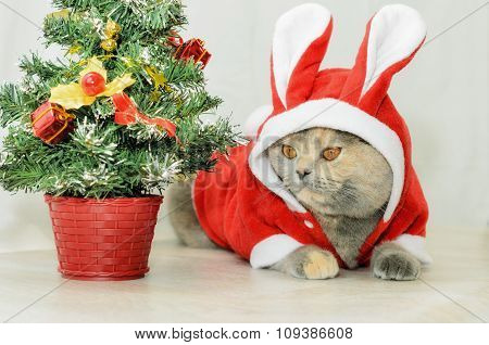 Christmas Cat Dressing Up In Red Rabbit Costume