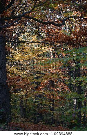 Autumn Timber Land
