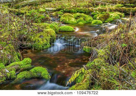 Mossy Rock Stream