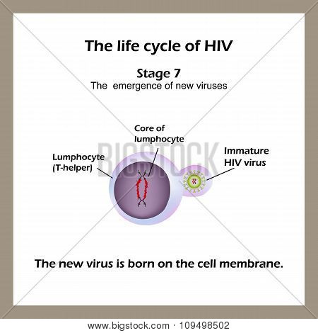 The life cycle of HIV. Stage 7 - The new virus is born on the cell membrane. World AIDS Day.