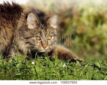 Cat Creeps On Grass