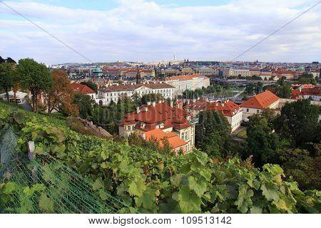 Vineyard Of Prague