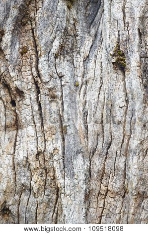 Old Tree Trunk Textured Bark. Natural Abstract Background
