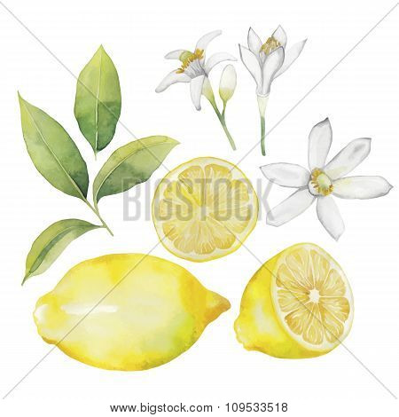 Watercolor lemon collection