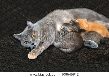 Mother cat feeding kittens.