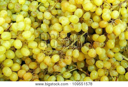 Yellow Sultana Grapes Background