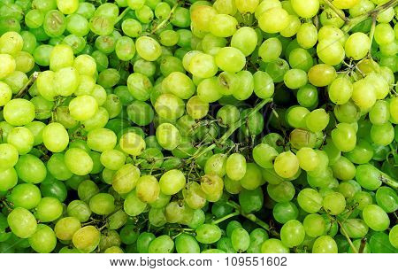 Green Sultana Grapes High Contrast Background Filtered