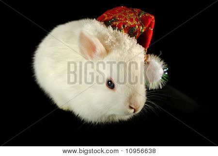 White christmas rabbit