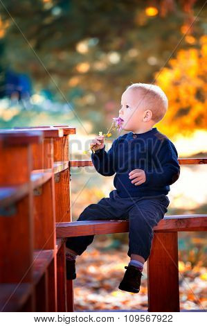 Baby Boy Portrait In The Fall
