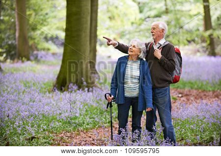 Senior Couple Walking Through Bluebell Wood
