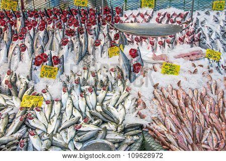 Great choice of fresh fish