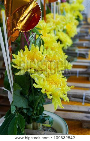 Bouquet Of Yellow Chrysanthemum In A Pot