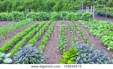 Herbs and root vegetables in an organic garden