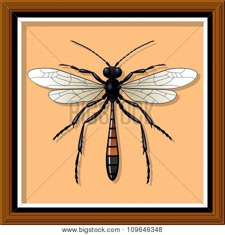 Sand wasp. Vector illustration.