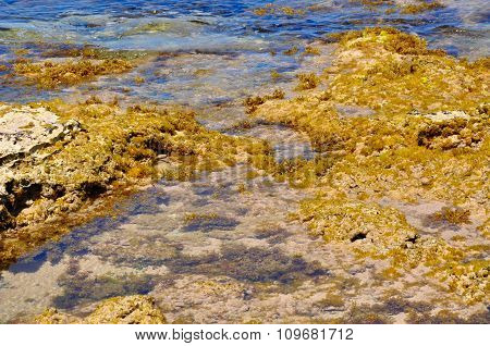 Reef Detail at Cape Peron, Western Australia