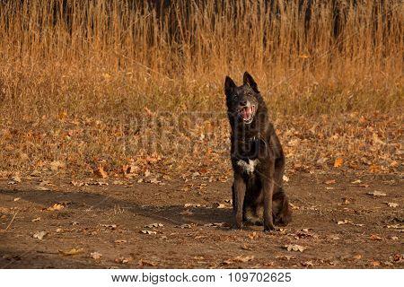 Mixed-breed Dog Sitting