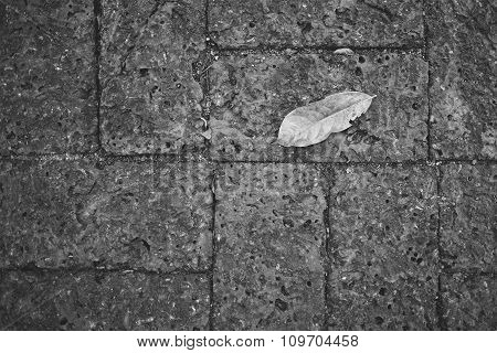 A Leaf On Laterite Brick(red Flagstone)
