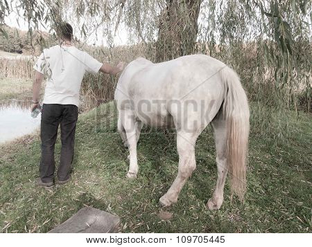 White Horse And Adult Male
