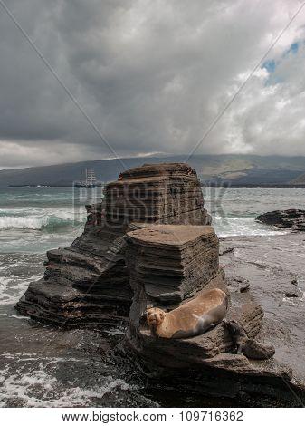 Rock Platform And Sea Lion