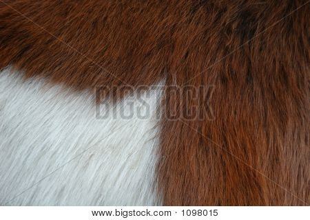 Two-Coloured Horse Fur