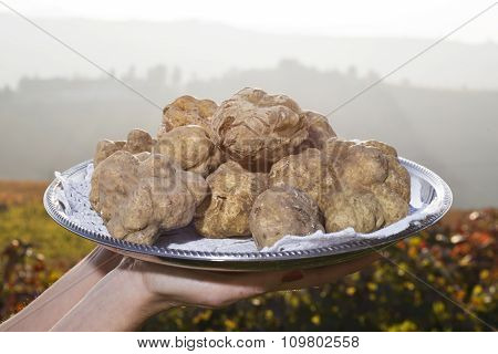White Truffles From Piedmont On The Tray In The Background Hills With Vineyards Of Langhe