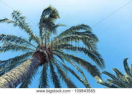 Retro palms image