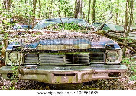 Tree Limb On Blue Dodge