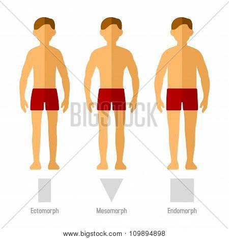 Men Body Types