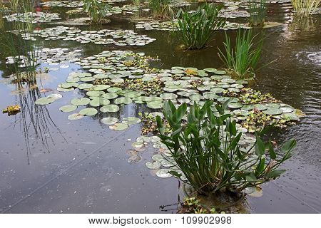 The Plants In An Artificial Pond
