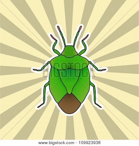 Insect sticker. shield bug. Palomena prasina. Sketch of shield bug.  shield bug Design for coloring