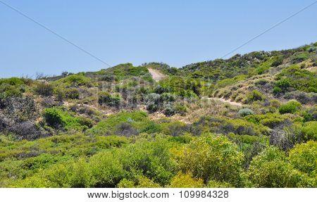 Coastal Green Dunes: Cape Peron, Western Australia